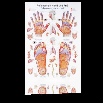 Lehrtafel: Reflexzonen Fuss und Hand 50 X 70 cm